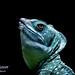 Basilic vert by mitchphotospassion