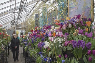 Smith College: Spring Bulb Show