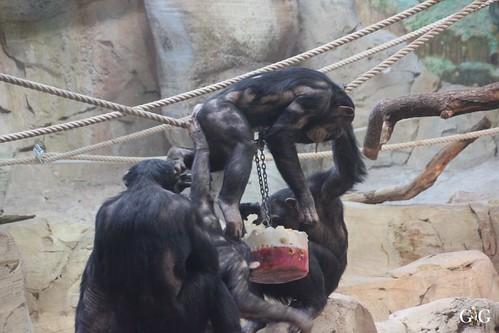 Zoo am Meer Bremerhaven 08.03.20151