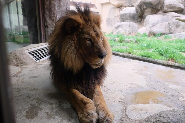 150320家族で日本平動物園 123 1