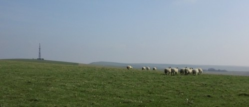 Sheep near radio masts