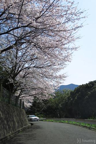 Mt. Douhakusan