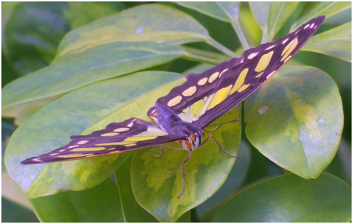 Papillons en Fêtes 2015 17010011772_66ae781d6c_o