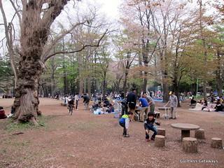 maruyama-sakura.jpg