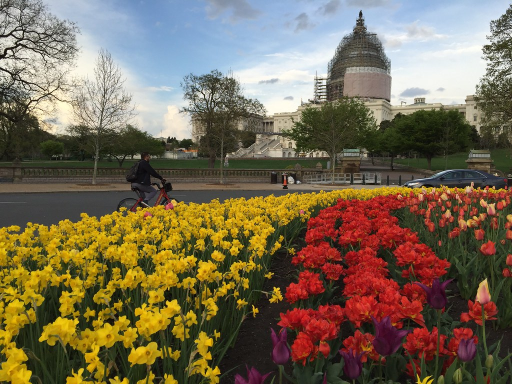 Bikeshare, tulips an the Capitol