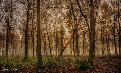 wood morning trees england mist sunrise woodland golden unitedkingdom sony a77 ashampstead westberkshire sonyalpha andyhough slta77 norcotwood andyhoughphotography