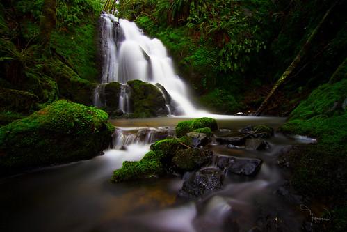 longexposure green water creek canon waterfall stream wideangle tokina hidden le lee lush ferns washingtonstate pnw gem t4i 10stop 1riverat matthewreichel