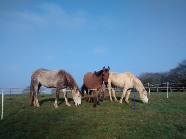 Watchful Mule