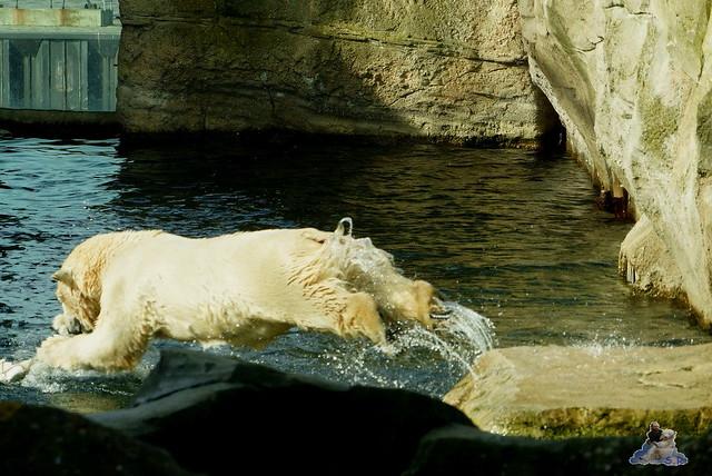 Zoo am Meer 07.03.2015   47
