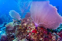 Turneffe Atoll, Belize Barrier Reef, Belize.