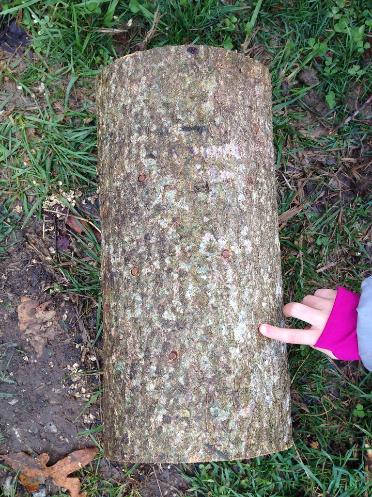 Inoculated log