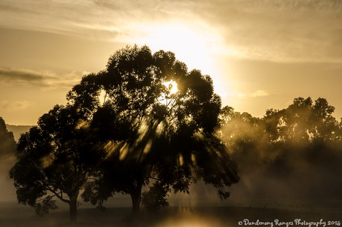 Sunrise in Rowville