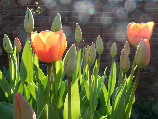 garden April 2015 (8)