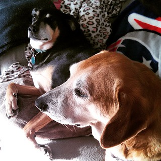 Sunday morning greetings from the hounds... #dogstagram #muttstagram #dogsofinstagram #instadog