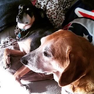 Sunday morning greetings from the hounds... #dogstagram #muttstagram #dogsofinstagram #instadog