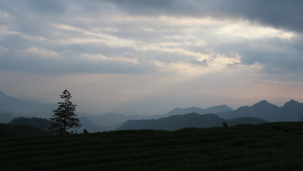 阿里山龍雲農場 (19)