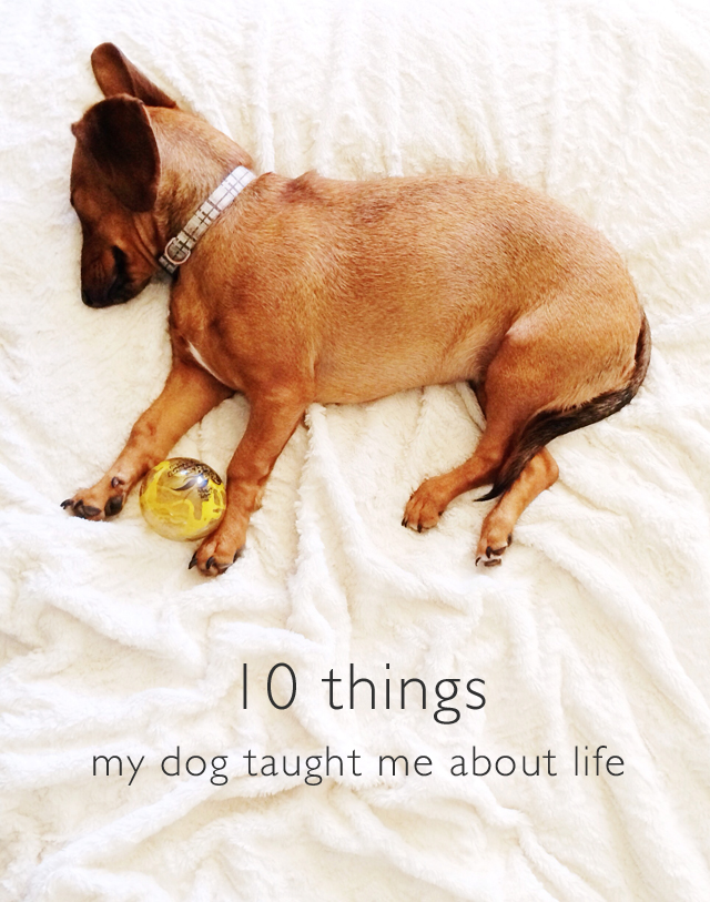 10 Things My Dog Taught Me About Life