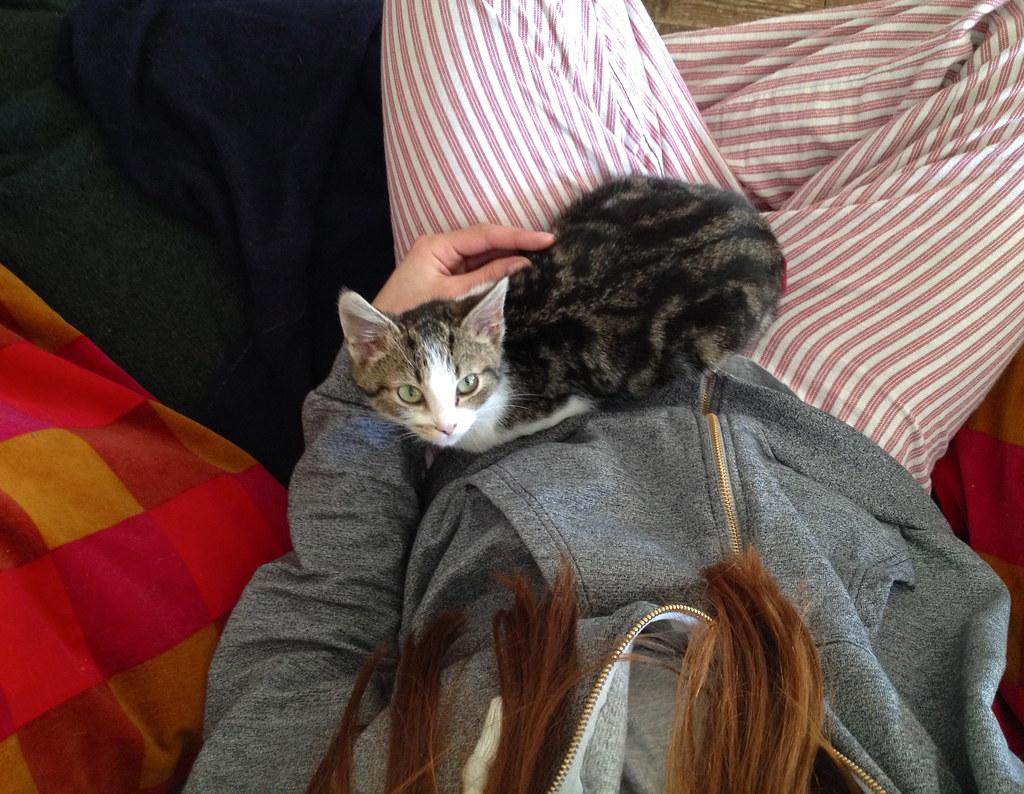 Dublin cat