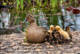 Pond Creche