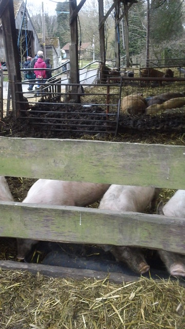 soon be burying our snouts in the trough...