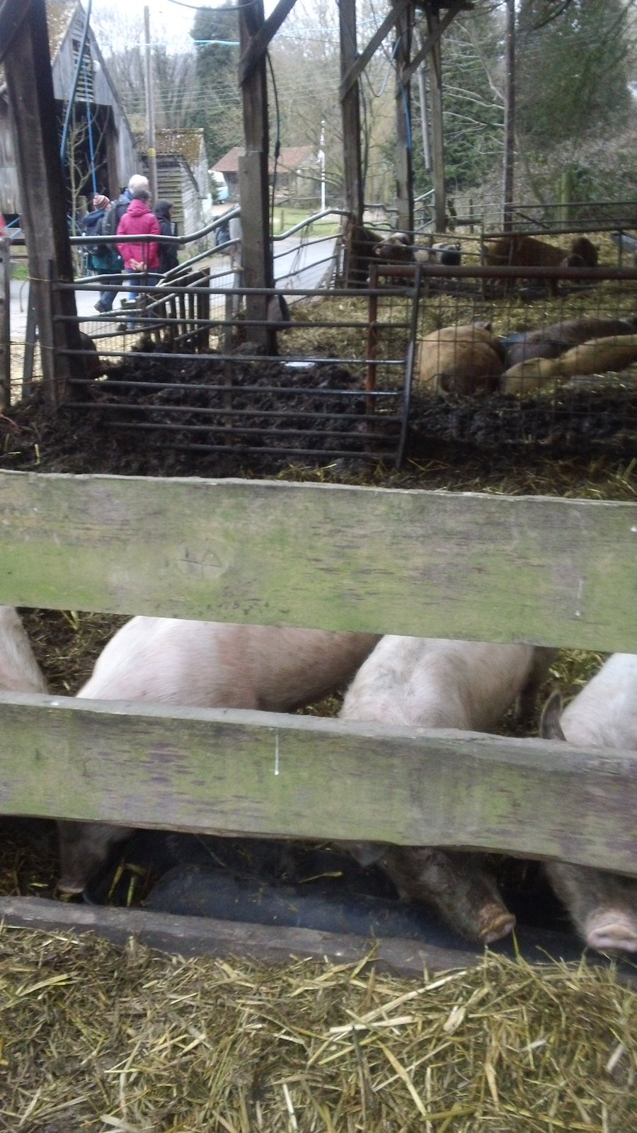 soon be burying our snouts in the trough... .....at the Farm's cafe near Forest Row