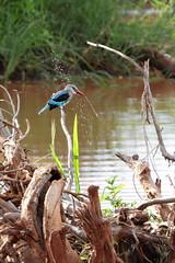 Kingfisher makes spray