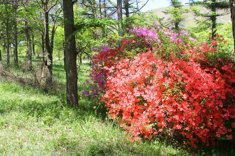 2014-05-07_03397_九州登山旅行.jpg