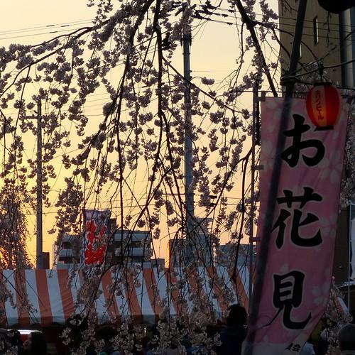 仙台からの新幹線まで、ちょっと時間があったので少しだけお花見