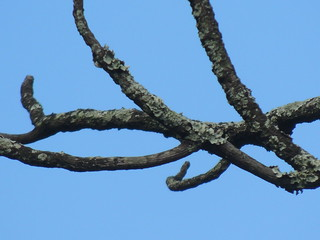 Naked branches against the blue sky.