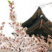 Spring_in_Changdeokgung_Palace_2015_13 by KOREA.NET - Official page of the Republic of Korea