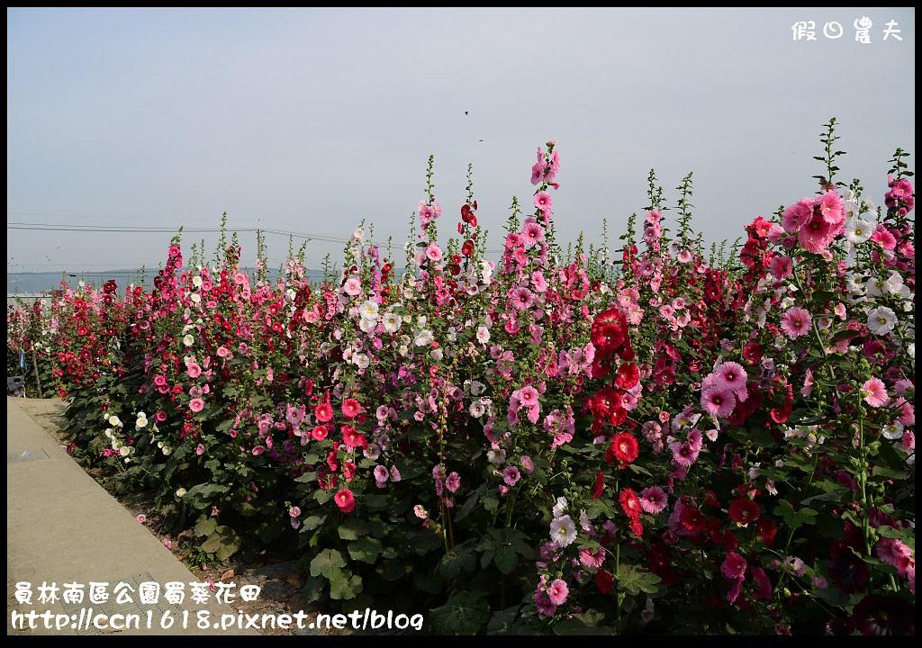 員林南區公園蜀葵花田DSC_2208
