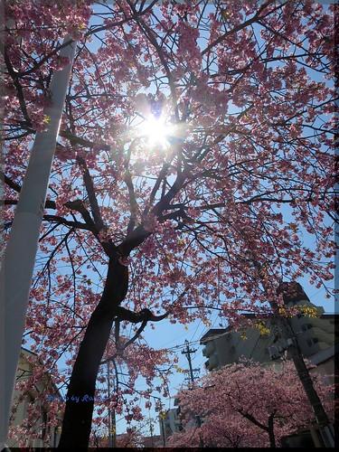 Photo:2015-03-27_ハンバーガーログブック_この時期桜がダブルで楽しめる!【高岳】JACK's KITCHEN_09 By:logtaka