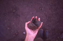 picking rocks at bay of fundy