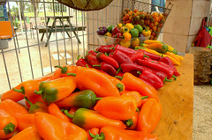 Orange, red and yelow paprika @Ministry of Agricul…