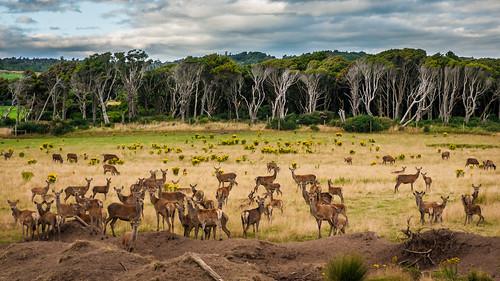 trees newzealand clouds surreal lakegeorge deer southisland variosonnar16803545za