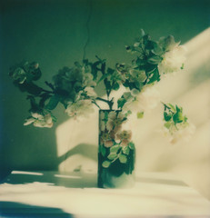 Apple Blossom - 'Roid Week Spring 2015 Day 4