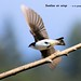 WBY2247-18 7D2-100 Swallow on wings by wbyoungphotos