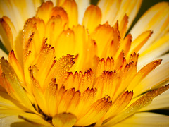 macro bloemen