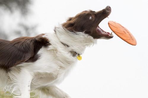 catch it....
