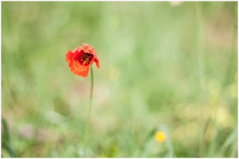 Sólo una flor