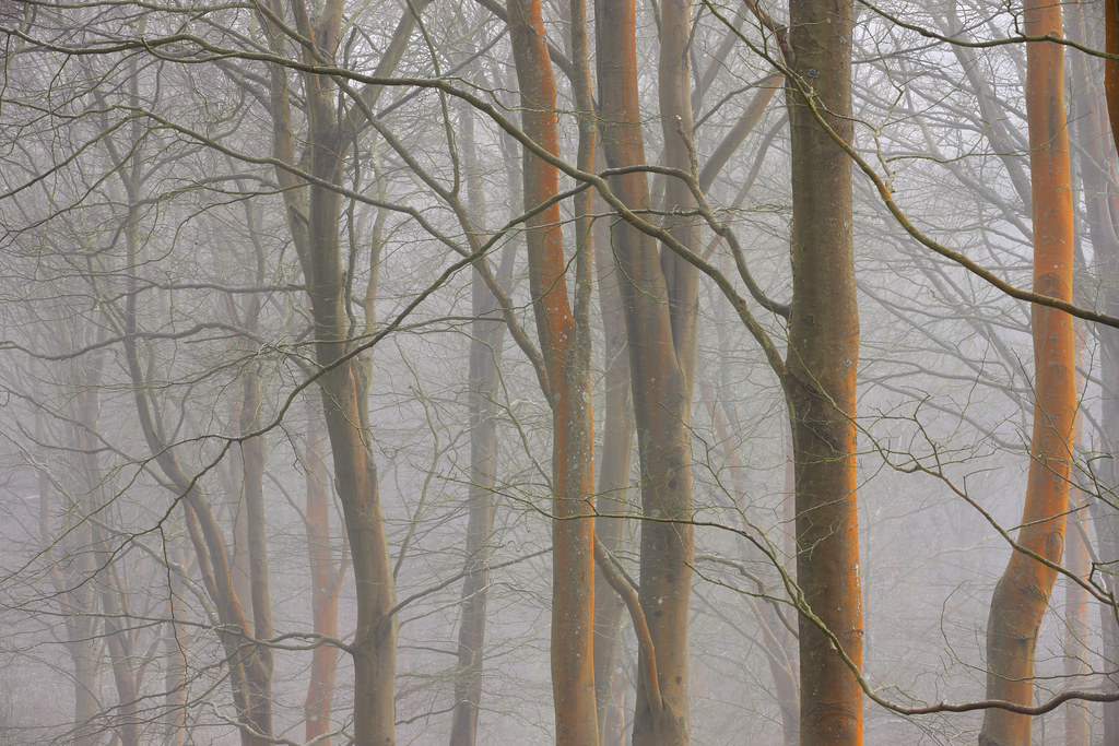 Fog, Friston Forest