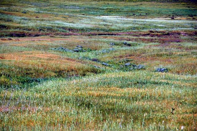 More Meadows