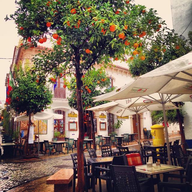 A walk among the orange trees