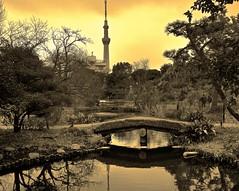 Reflecting Tokyo Skytree from Mukojima Hyakkaen Gardens