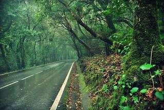 Bosque subtropical