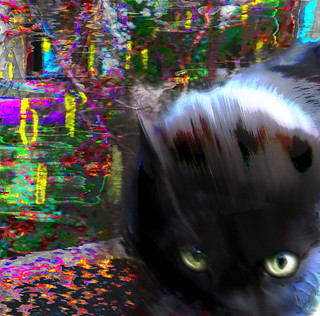 Die Katze auf der Mauer, die nicht stillhalten  sondern gestreichelt werden wollte