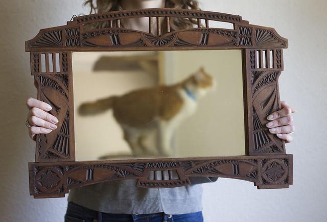 mirror/cat