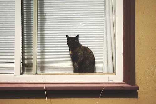 Cats Of EyeEm in Bernalwood at Bernal Heights