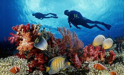 Du lịch Côn Đảo bạn nên tham gia chơi những gì