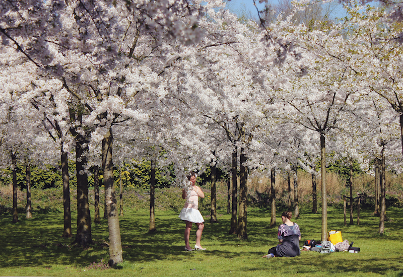 Cherry blossoms in Amsterdams Kersenbloementuin photo shoot